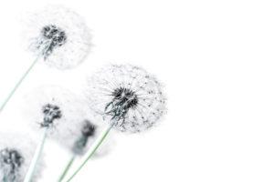 Allergic Rhinitis help in Brisbane using acupuncture